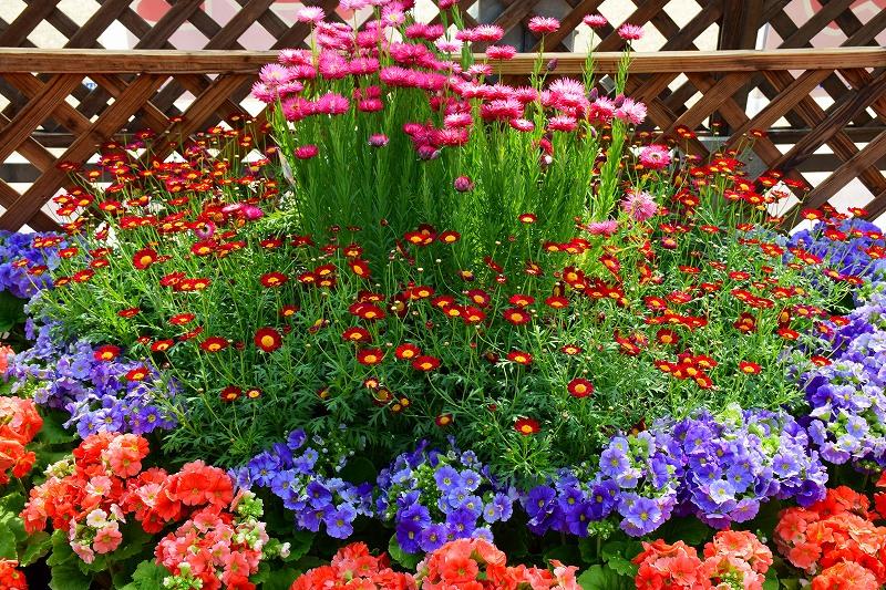 『京都植物園』は春の息吹が。見事な春の花が20140318_e0237645_141446.jpg
