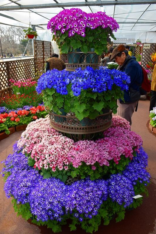『京都植物園』は春の息吹が。見事な春の花が20140318_e0237645_1422958.jpg