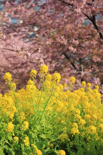松田山の河津桜_e0158653_0164173.jpg