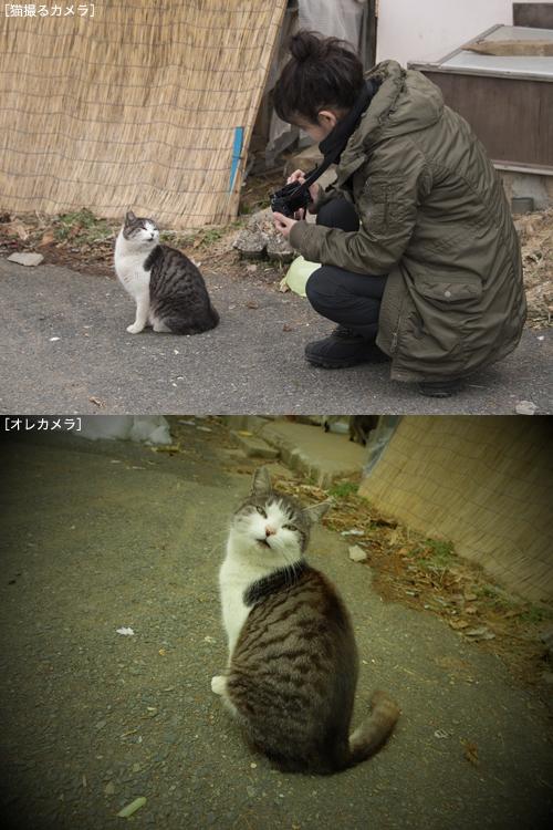 猫日和 2:少しずつ_a0180681_018424.jpg