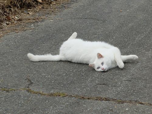 猫日和 2:少しずつ_a0180681_23443931.jpg