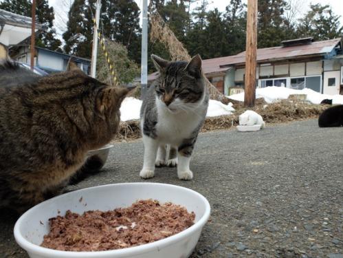 猫日和 2:少しずつ_a0180681_23592247.jpg