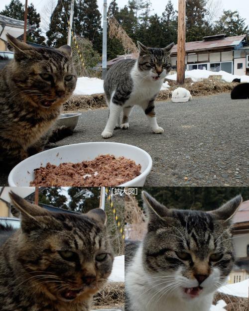 猫日和 2:少しずつ_a0180681_23592416.jpg