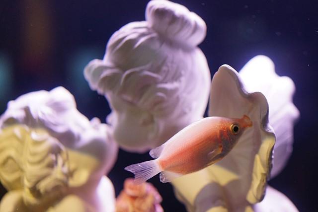 バレンタインデー in 新江ノ島水族館2014_b0145398_19155474.jpg