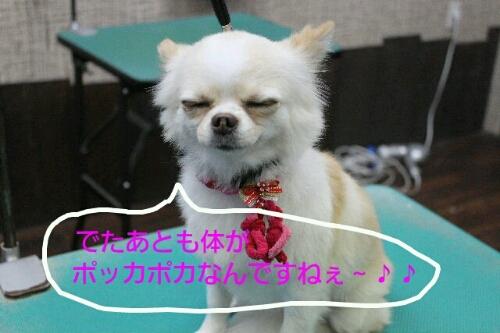 b0130018_01093.jpg