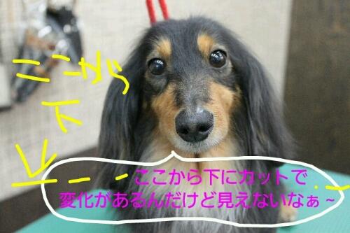 b0130018_064676.jpg