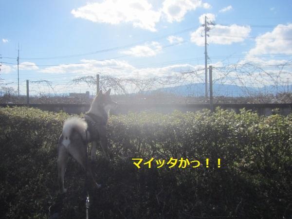 f0143123_2001778.jpg
