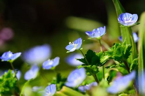 春らしくなってきました_f0324026_19445263.jpg