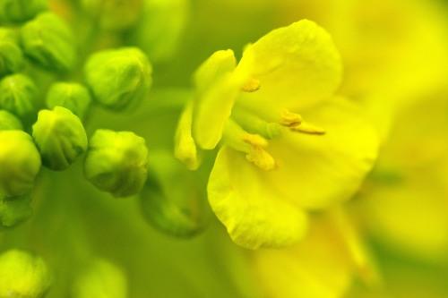 春らしくなってきました_f0324026_19520227.jpg