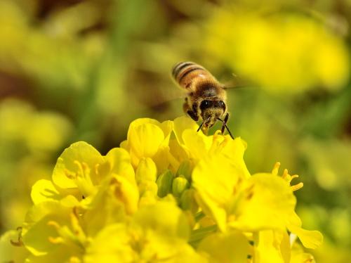 春らしくなってきました_f0324026_19552094.jpg