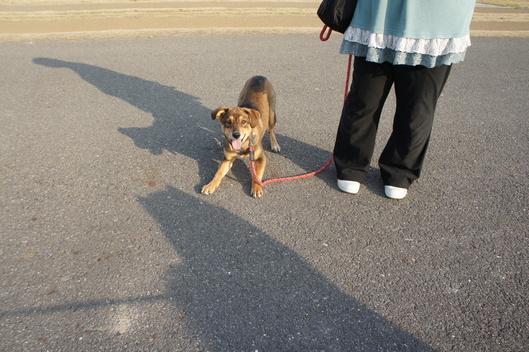 お散歩友だちと再会_f0128542_1020792.jpg