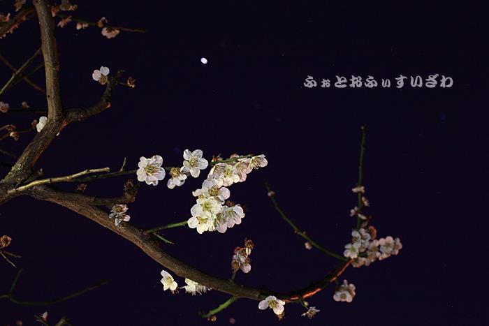 c0181958_053522.jpg