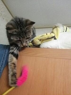 猫じゃらし_b0112380_2102971.jpg