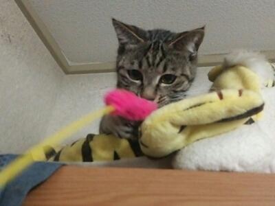 猫じゃらし_b0112380_211686.jpg