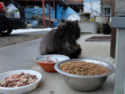 猫日和 6:Memento Mori_a0180681_004499.jpg