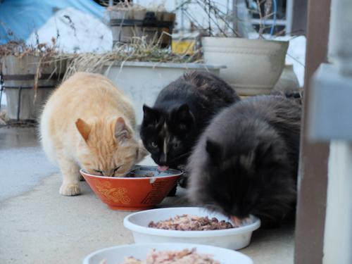 猫日和 6:Memento Mori_a0180681_0402075.jpg