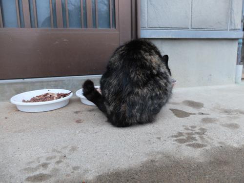 猫日和 6:Memento Mori_a0180681_0515874.jpg