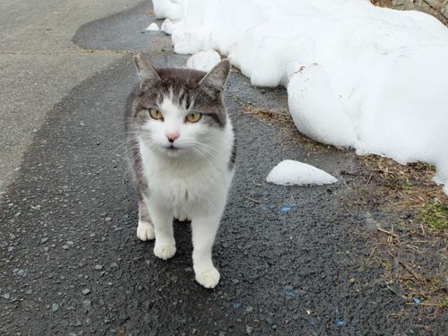 猫日和 2:少しずつ_a0180681_15435422.jpg