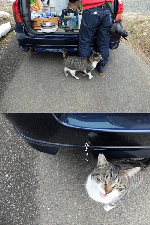 猫日和 2:少しずつ_a0180681_15463954.jpg