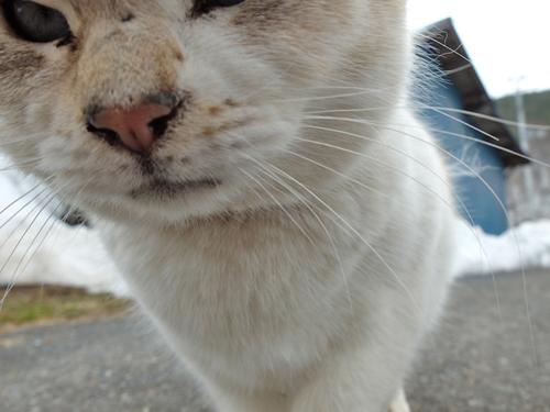 猫日和 2:少しずつ_a0180681_1759885.jpg