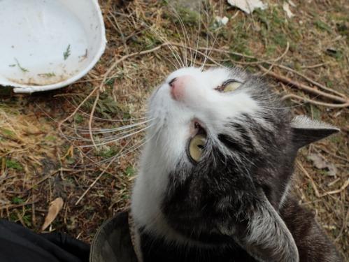 猫日和 3:ワンコのみなさん_a0180681_18301717.jpg