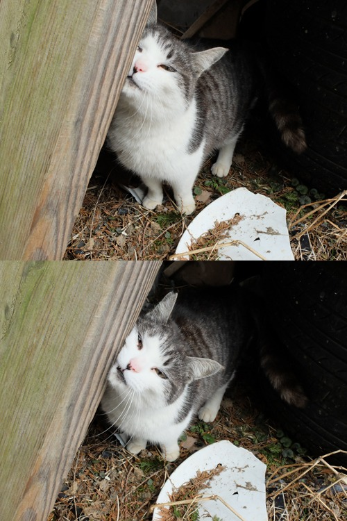 猫日和 3:ワンコのみなさん_a0180681_1837422.jpg