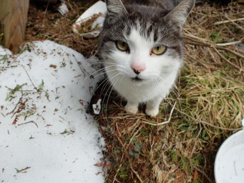 猫日和 3:ワンコのみなさん_a0180681_18424926.jpg