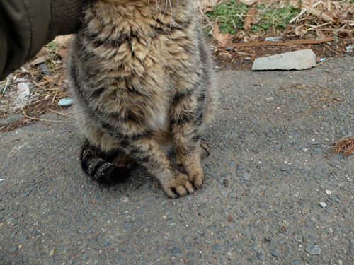 猫日和 2:少しずつ_a0180681_1845287.jpg