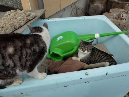 猫日和 3:ワンコのみなさん_a0180681_18531018.jpg
