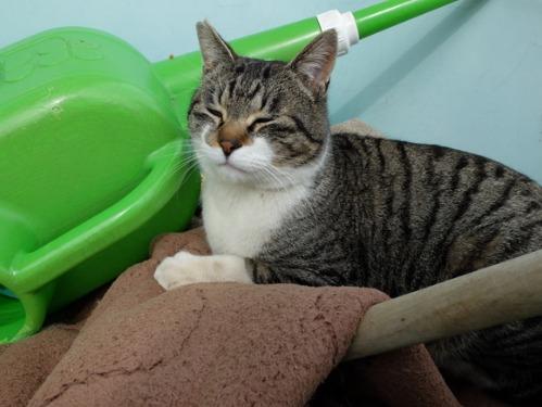 猫日和 3:ワンコのみなさん_a0180681_18534322.jpg