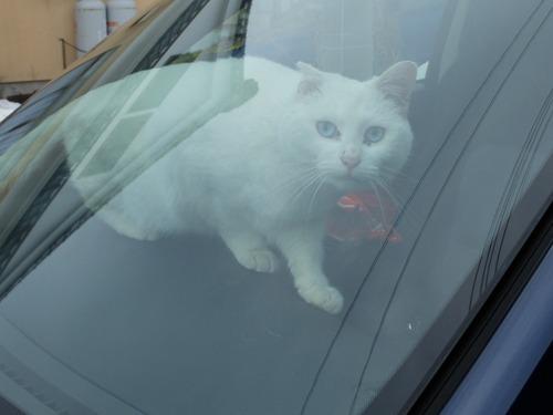 猫日和 3:ワンコのみなさん_a0180681_18571669.jpg