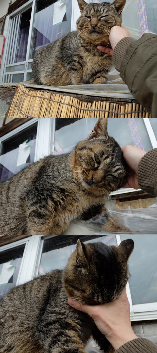 猫日和 3:ワンコのみなさん_a0180681_19122548.jpg