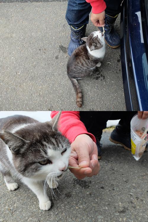 猫日和 3:ワンコのみなさん_a0180681_2012948.jpg