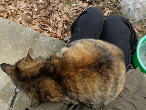 猫日和 4:日なたの昼寝_a0180681_21362367.jpg