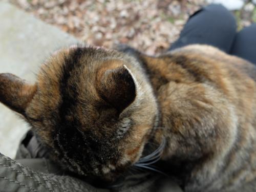 猫日和 4:日なたの昼寝_a0180681_21383172.jpg