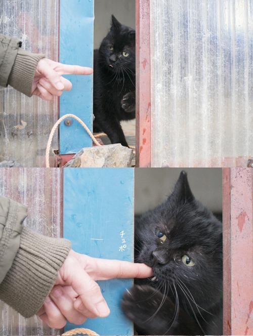 猫日和 5:ふたり_a0180681_2214532.jpg