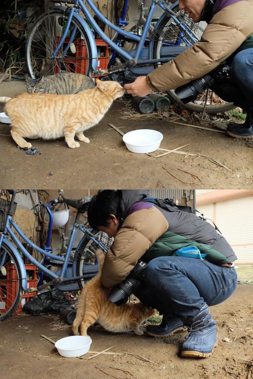 猫日和 4:日なたの昼寝_a0180681_22435071.jpg