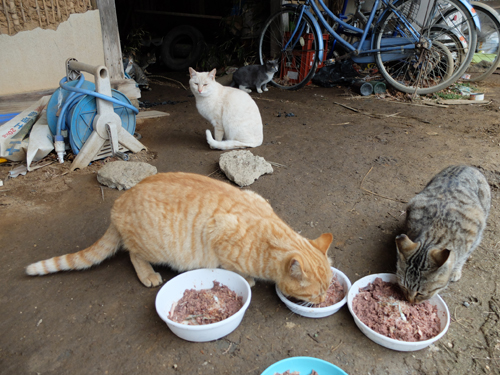猫日和 4:日なたの昼寝_a0180681_23243934.jpg