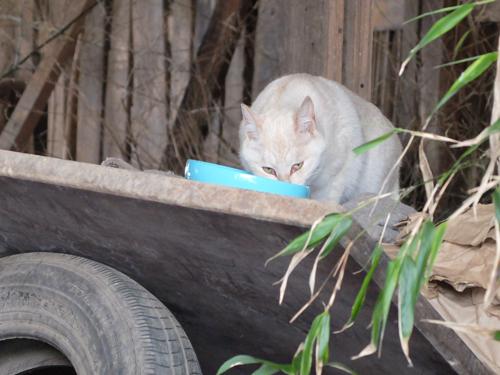 猫日和 4:日なたの昼寝_a0180681_23264463.jpg