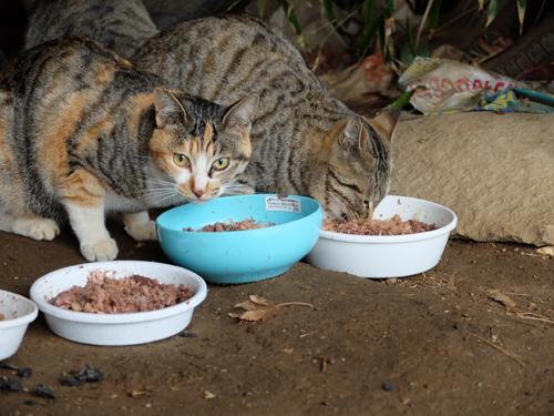猫日和 4:日なたの昼寝_a0180681_23295761.jpg