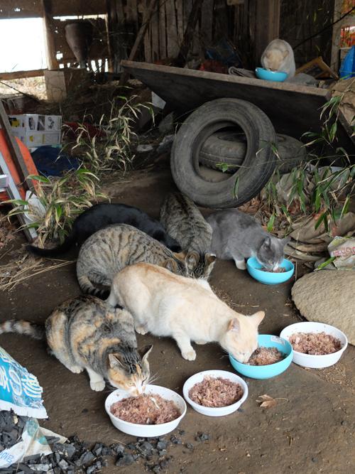 猫日和 4:日なたの昼寝_a0180681_23301054.jpg