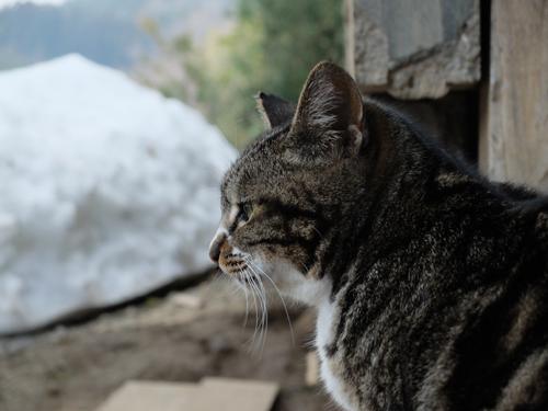 猫日和 4:日なたの昼寝_a0180681_23310100.jpg