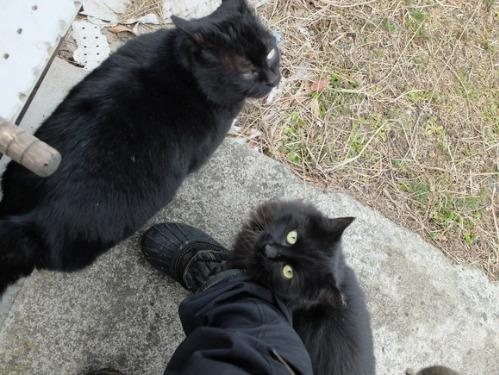 猫日和 5:ふたり_a0180681_2345282.jpg