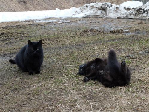 猫日和 5:ふたり_a0180681_2356122.jpg