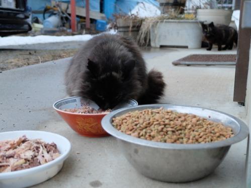 猫日和 6:Memento Mori_a0180681_23593781.jpg