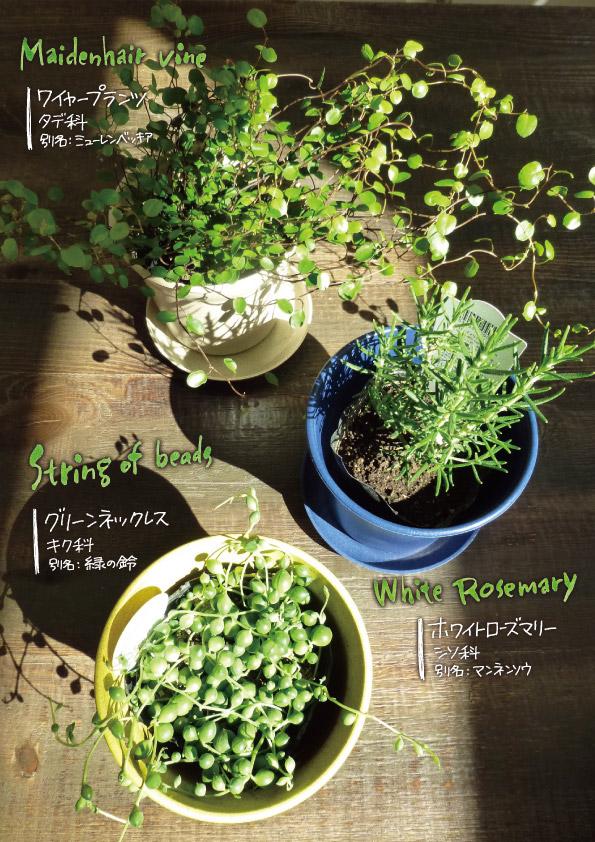 室内用の植物たち。_d0272182_2141833.jpg