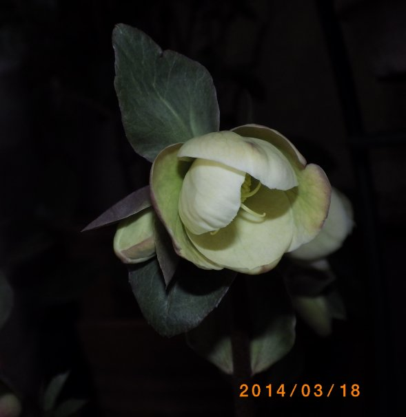 e0191585_21283698.jpg