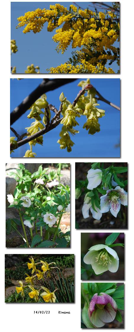 春らしくなりました。_c0051105_11312680.jpg