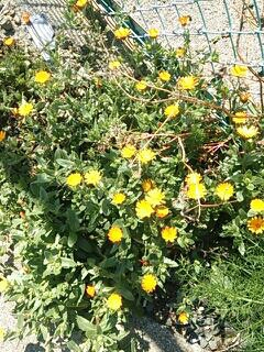春を見つけました    梅崎_e0149215_10575914.jpg