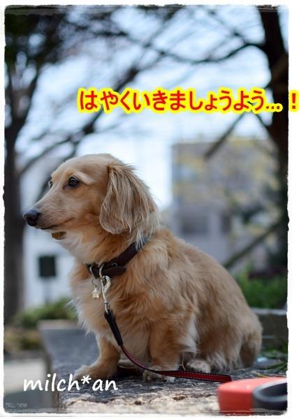 b0115642_21284926.jpg